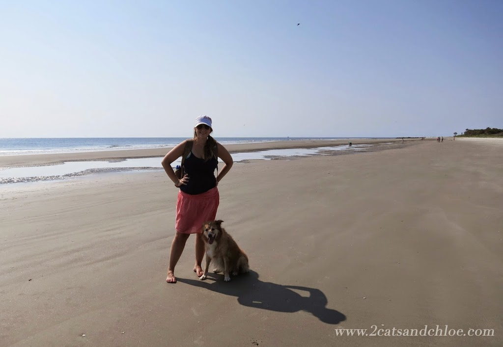 Morris Island is Dog Friendly Beach, Charleston