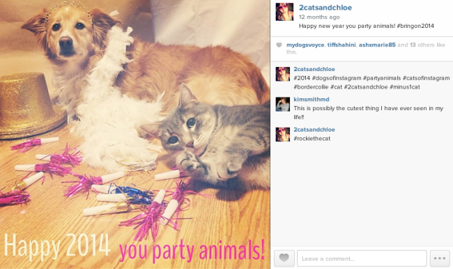 2 cats & chloe: Happy New Year you Party Animals