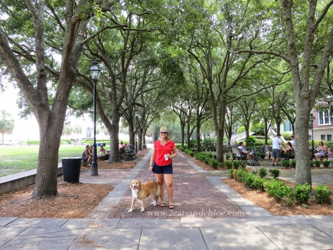 Charleston SC //  Travel with a dog