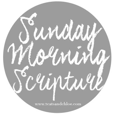 2 cats & chloe: Sunday Morning Scripture Logo