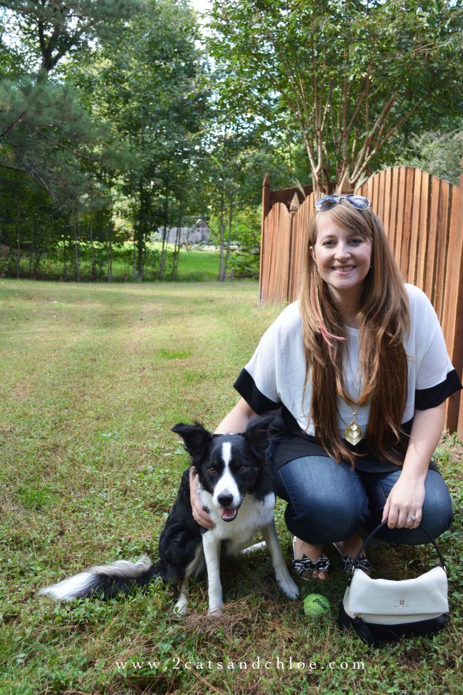 2 cats & chloe: black and white fall outfit, border collie