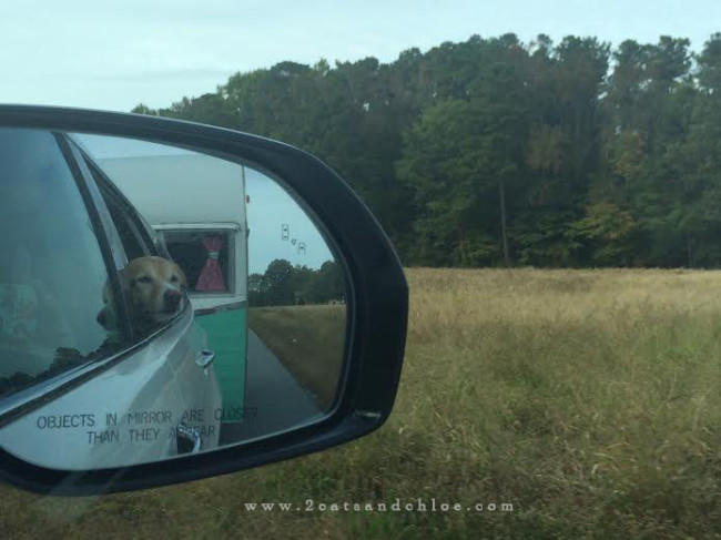 A dog, a camper in virginia