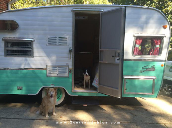 2 cats & chloe: Seafoam re-issued 1961 2015 shasta