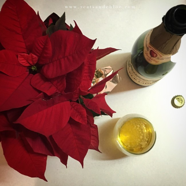 2 cats & chloe: December Confessions: Poinsettia and Cider